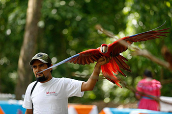 Alex, our guide at Copan, with rehabbed scarlet macaw