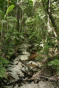 stream and rainforest